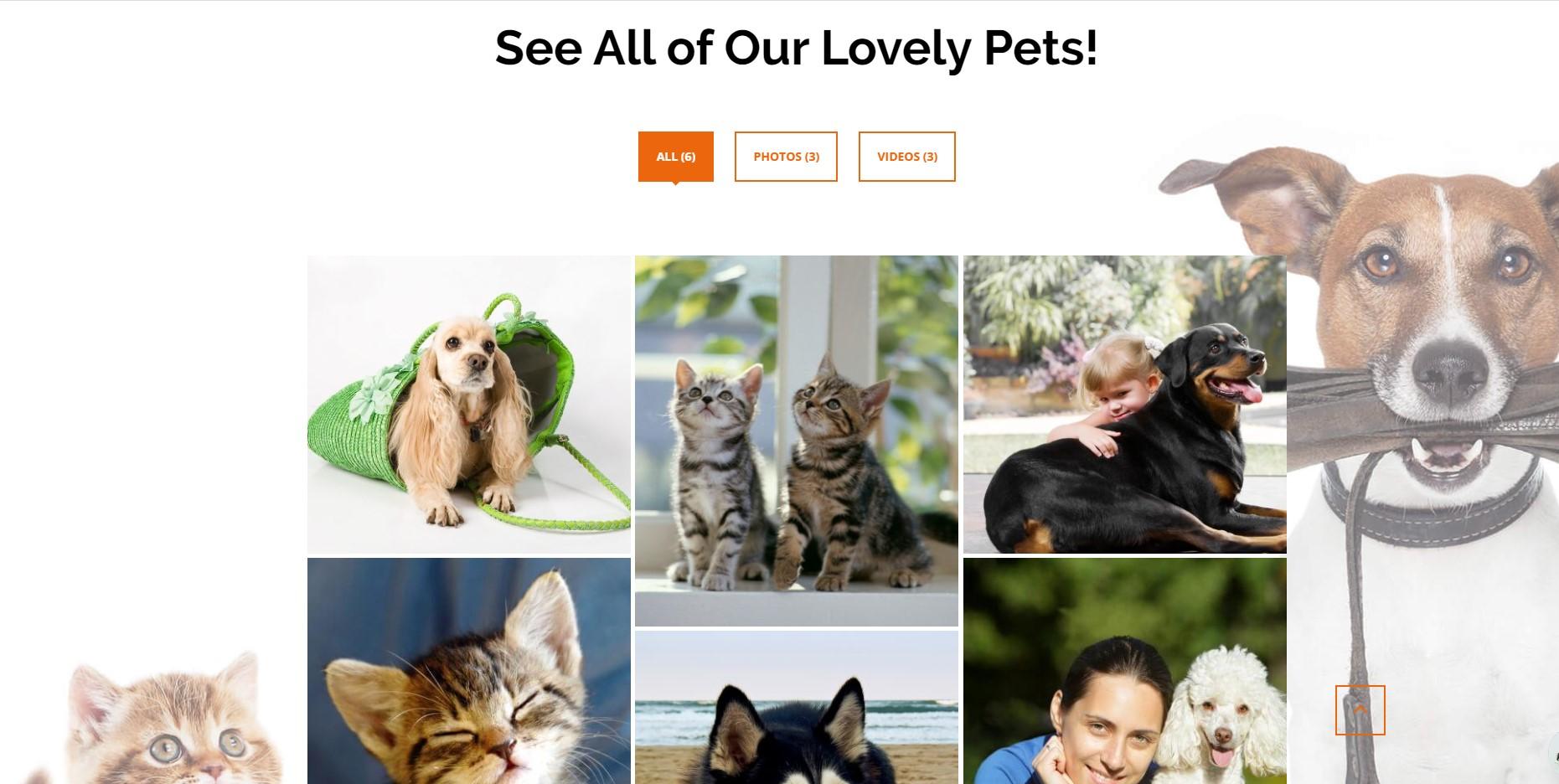 PetInn - Animal Shelter Responsive WordPress Theme